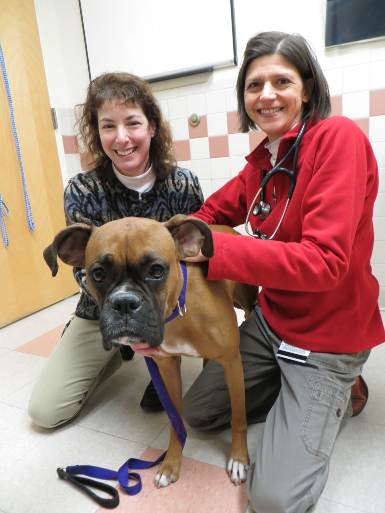 Delta the Boxer with vets from Tufts